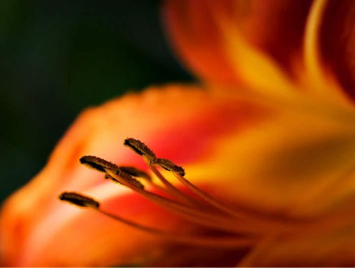 photography by Argishti Khachik